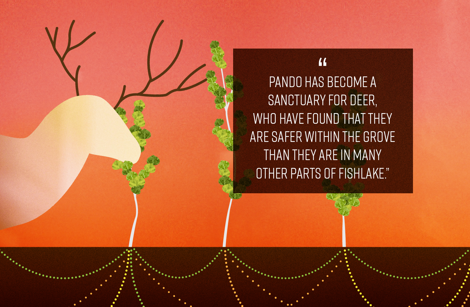 Pando has become a sanctuary for deer.